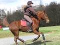 cce-la-salantine-poney-2-mars-201-20-jpg