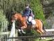 cce-la-salantine-poney-2-mars-201-25-jpg