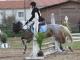 cce-la-salantine-poney-3-mars-2013-130-jpg