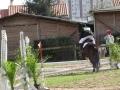 cce-la-salantine-poney-3-mars-2013-77-jpg