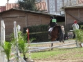 cce-la-salantine-poney-3-mars-2013-78-jpg