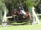 Poney 3 Merveille