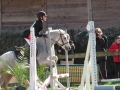 cce-la-salantine-poney-3-mars-2013-96-jpg