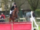 Poney Elite Tzigane