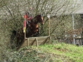 cce-poney1-mars2013-39-jpg