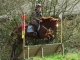 cce-poney1-mars2013-4-jpg